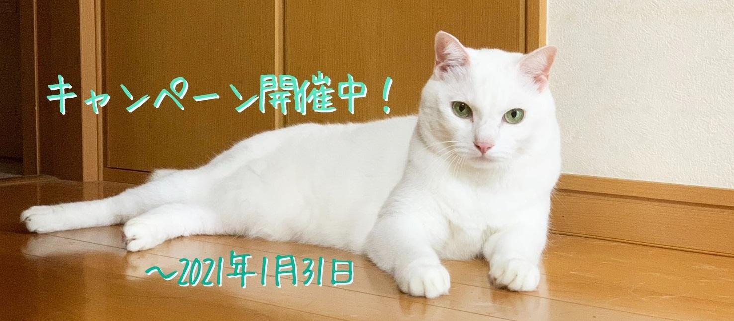 白猫マシュくん